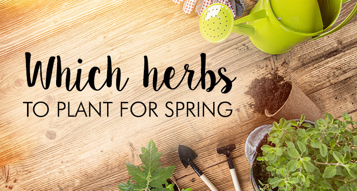 Which Herbs to Plant in Spring