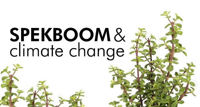 Spekboom and Climate Change