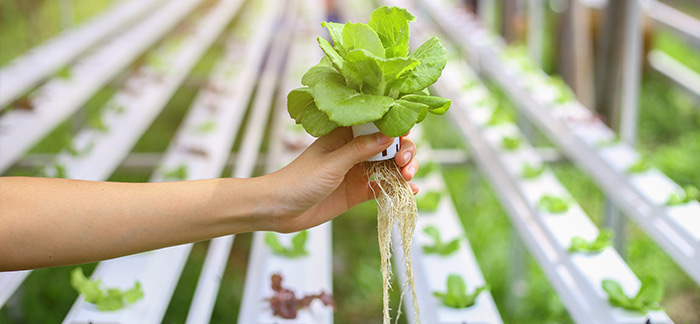 Bring hydroponic farming into your home