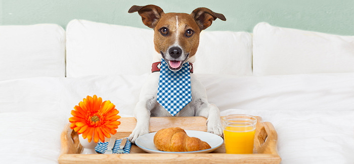 Five Star Hotel Luxury for your furry friends