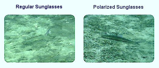 polarised glasses  What Are Polarized Sunglasses? - Sunglasses Common Questions ...